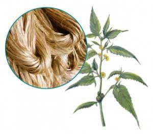 Jutepflanze und Jutefasern